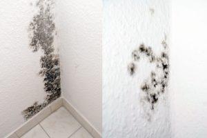 FrontierHomeInspection-professional-homeinspection-inspection-service-consturction-mold-inspection